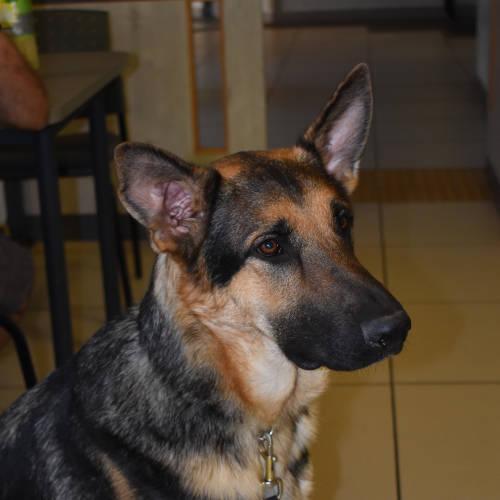 Inset image of dog